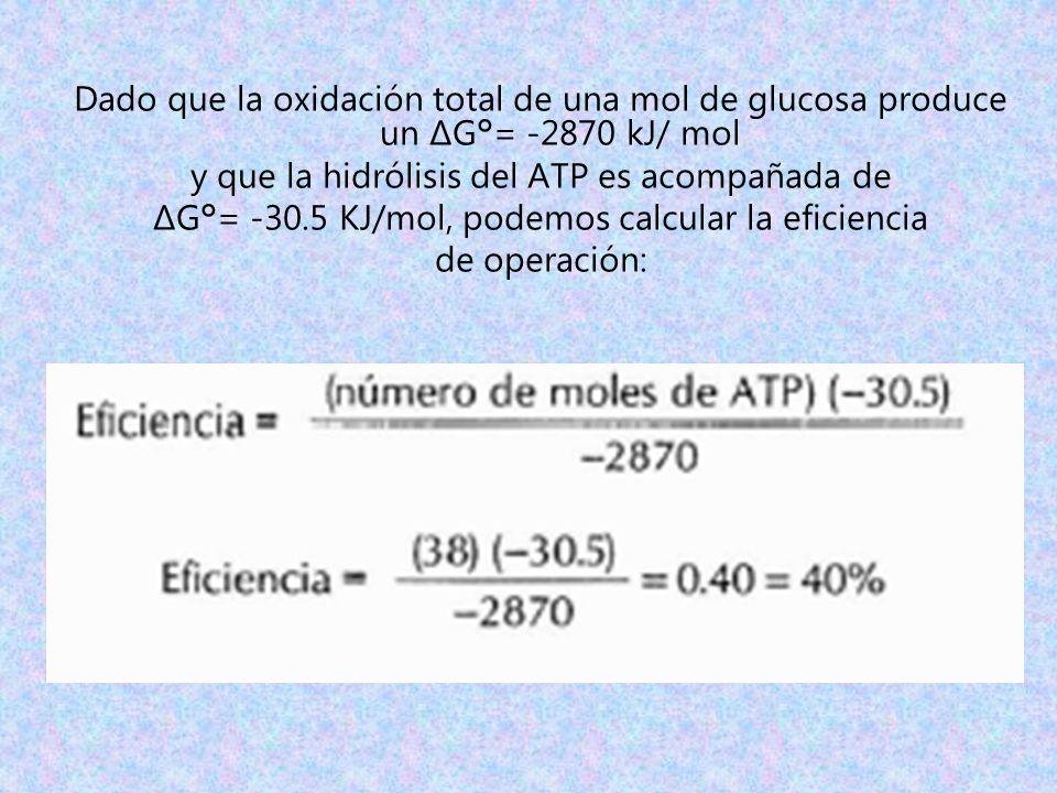 Dado que la oxidación total de una mol de glucosa produce un ΔG°= -2870 kJ/ mol y que la hidrólisis del ATP es acompañada de ΔG°= -30.5 KJ/mol, podemo