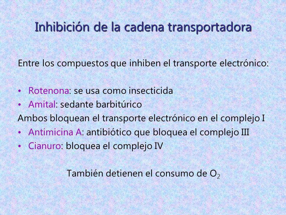 Inhibición de la cadena transportadora Entre los compuestos que inhiben el transporte electrónico: Rotenona: se usa como insecticida Amital: sedante b