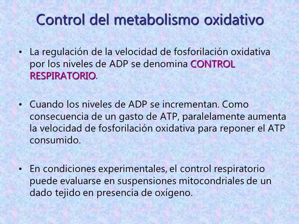 Control del metabolismo oxidativo CONTROL RESPIRATORIOLa regulación de la velocidad de fosforilación oxidativa por los niveles de ADP se denomina CONT