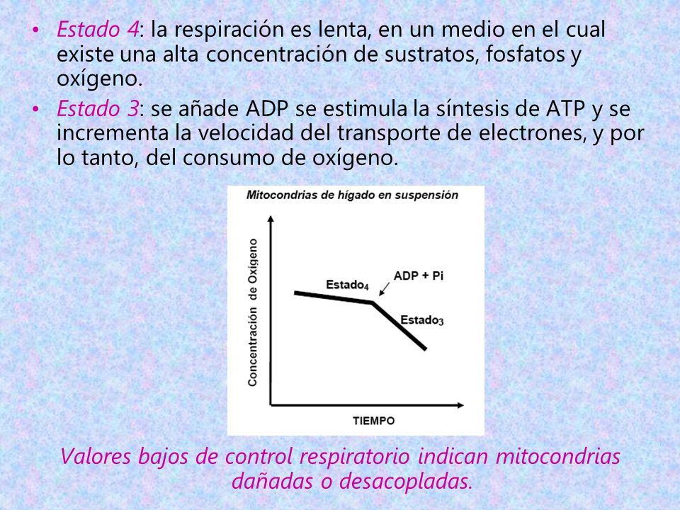 Estado 4: la respiración es lenta, en un medio en el cual existe una alta concentración de sustratos, fosfatos y oxígeno. Estado 3: se añade ADP se es