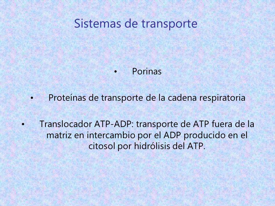 Sistemas de transporte Porinas Proteínas de transporte de la cadena respiratoria Translocador ATP-ADP: transporte de ATP fuera de la matriz en interca