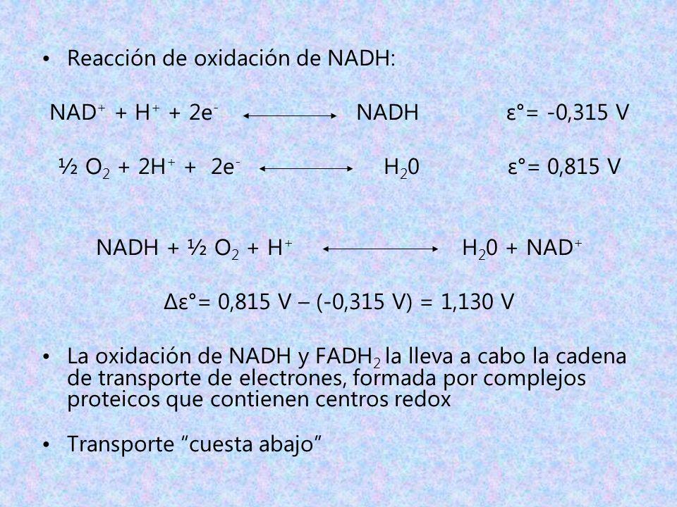 Reacción de oxidación de NADH: NAD + + H + + 2e - NADH ε°= -0,315 V ½ O 2 + 2H + + 2e - H 2 0 ε°= 0,815 V NADH + ½ O 2 + H + H 2 0 + NAD + Δε°= 0,815