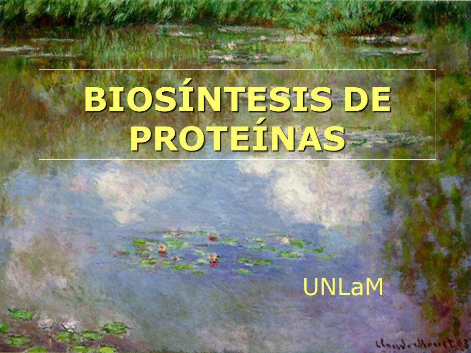 BIOSÍNTESIS DE PROTEÍNAS UNLaM