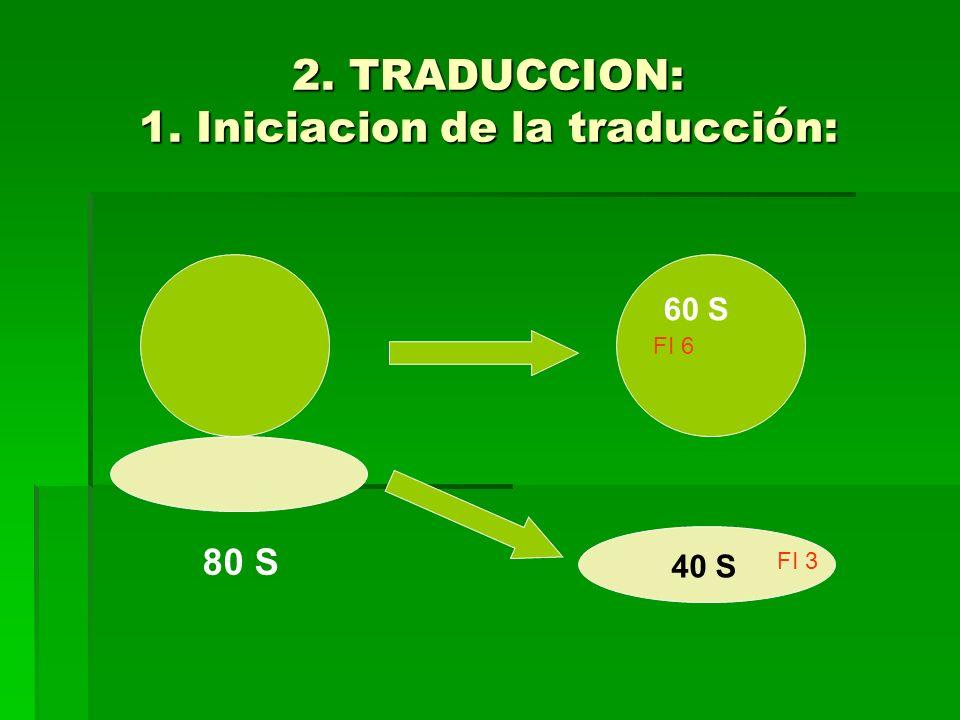 2. TRADUCCION: 1. Iniciacion de la traducci ó n: FI 6 80 S 60 S 40 S FI 3