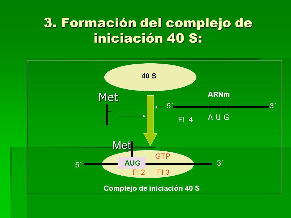 3. Formación del complejo de iniciación 40 S: Met Met AUG GTP FI 2 FI 3 5´ 3´ Complejo de iniciación 40 S 40 S ARNmMet 5´3´ A U G FI 4