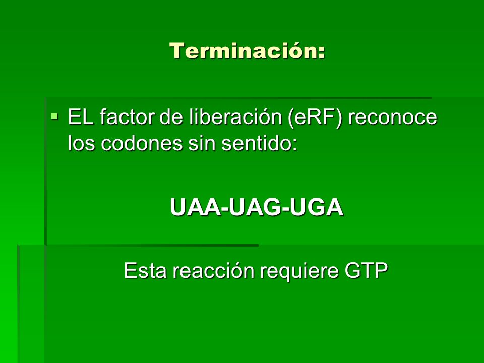 Terminación: EL factor de liberación (eRF) reconoce los codones sin sentido: EL factor de liberación (eRF) reconoce los codones sin sentido:UAA-UAG-UG