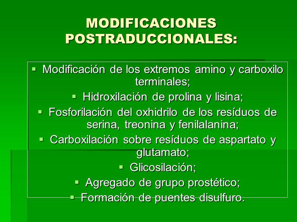 MODIFICACIONES POSTRADUCCIONALES: Modificación de los extremos amino y carboxilo terminales; Modificación de los extremos amino y carboxilo terminales