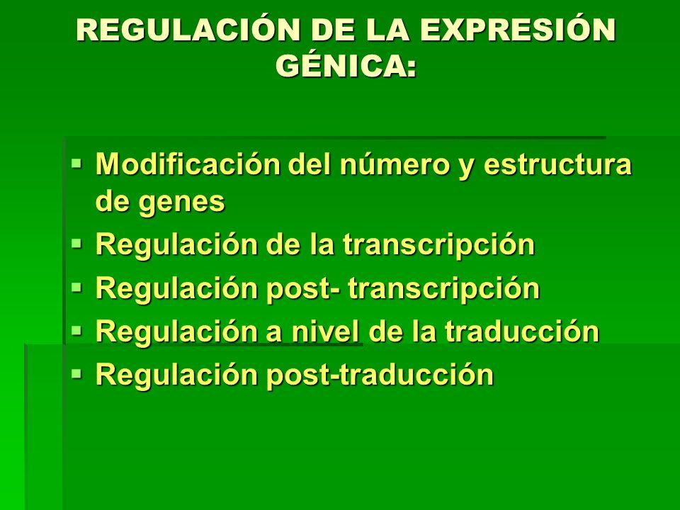 REGULACIÓN DE LA EXPRESIÓN GÉNICA: Modificación del número y estructura de genes Modificación del número y estructura de genes Regulación de la transc