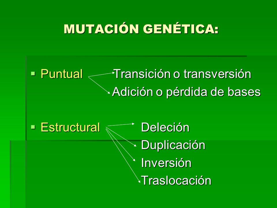 MUTACIÓN GENÉTICA: Puntual Transición o transversión Puntual Transición o transversión Adición o pérdida de bases Adición o pérdida de bases Estructur