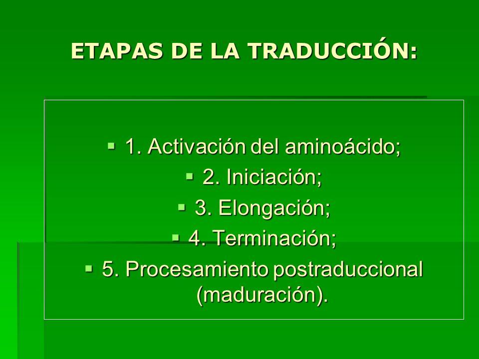 ETAPAS DE LA TRADUCCIÓN: 1. Activación del aminoácido; 1. Activación del aminoácido; 2. Iniciación; 2. Iniciación; 3. Elongación; 3. Elongación; 4. Te