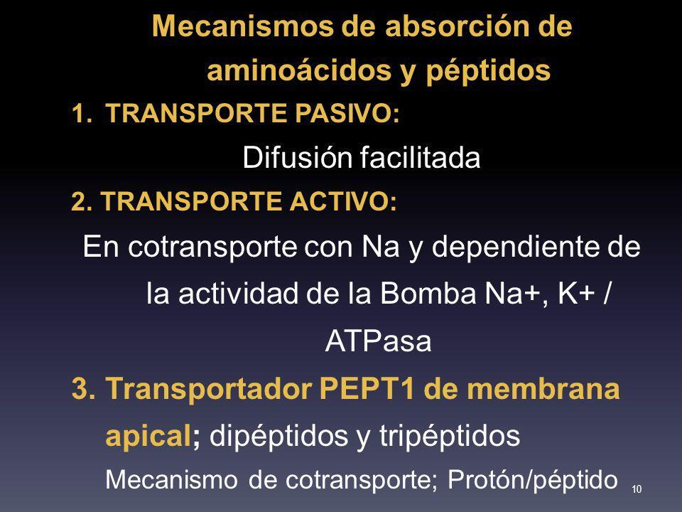 Mecanismos de absorción de aminoácidos y péptidos 1.TRANSPORTE PASIVO: Difusión facilitada 2. TRANSPORTE ACTIVO: En cotransporte con Na y dependiente