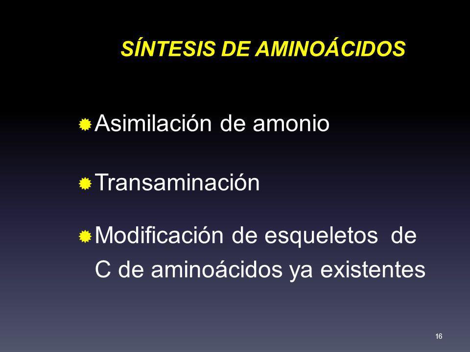 SÍNTESIS DE AMINOÁCIDOS Asimilación de amonio Transaminación Modificación de esqueletos de C de aminoácidos ya existentes 16
