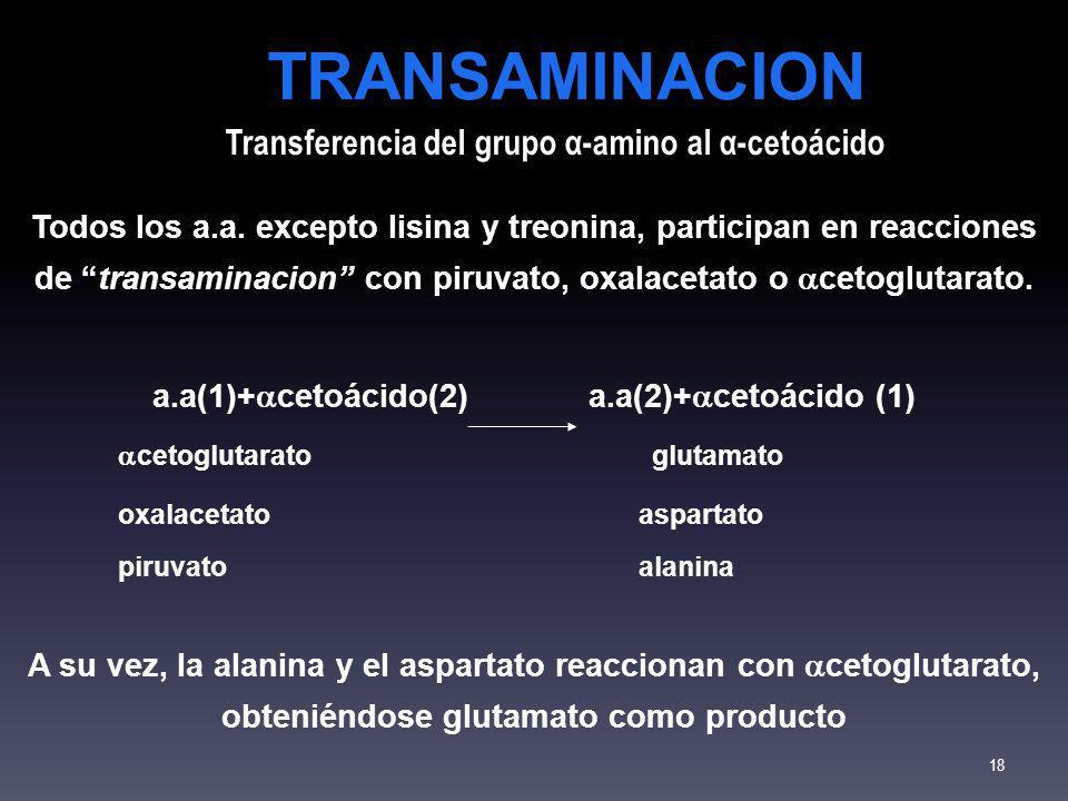 Todos los a.a. excepto lisina y treonina, participan en reacciones de transaminacion con piruvato, oxalacetato o cetoglutarato. a.a(1)+ cetoácido(2) a