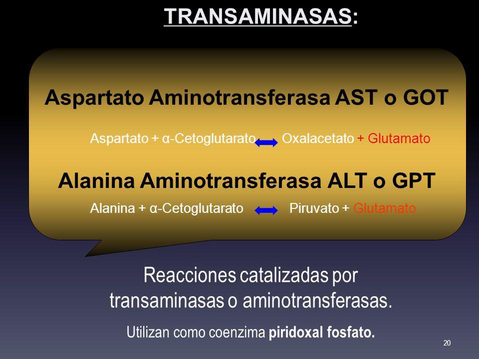 Aspartato Aminotransferasa AST o GOT Aspartato + α-CetoglutaratoOxalacetato + Glutamato Alanina Aminotransferasa ALT o GPT Alanina + α-Cetoglutarato P