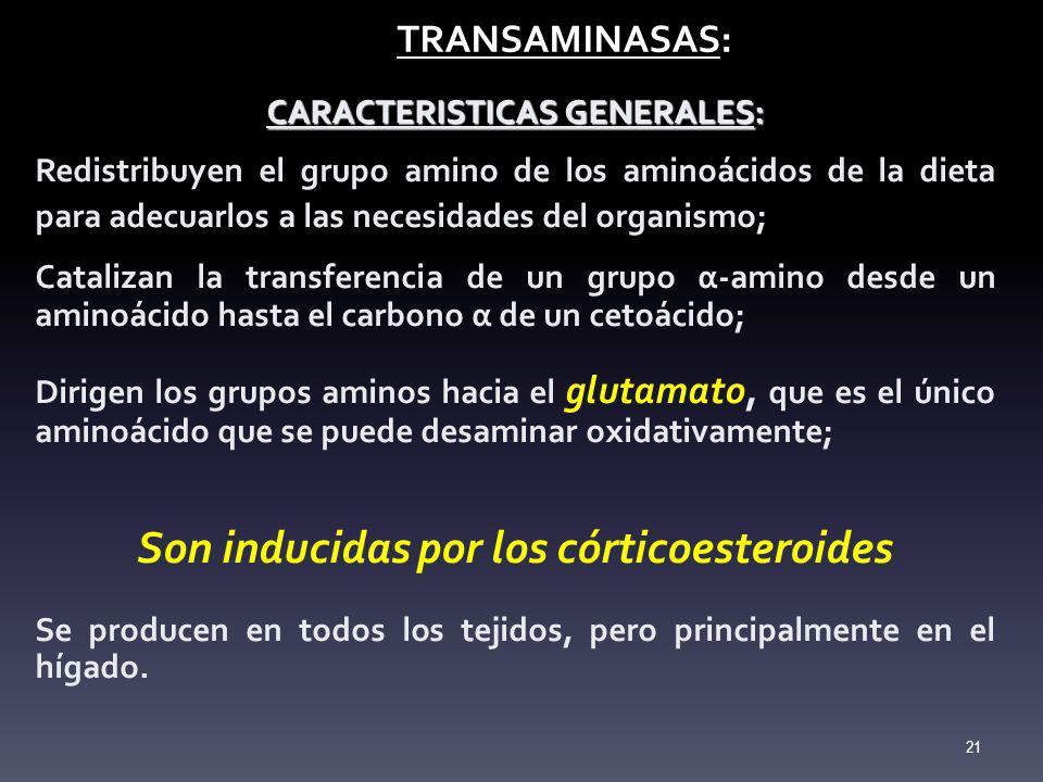 TRANSAMINASAS: TRANSAMINASAS: CARACTERISTICAS GENERALES: Redistribuyen el grupo amino de los aminoácidos de la dieta para adecuarlos a las necesidades