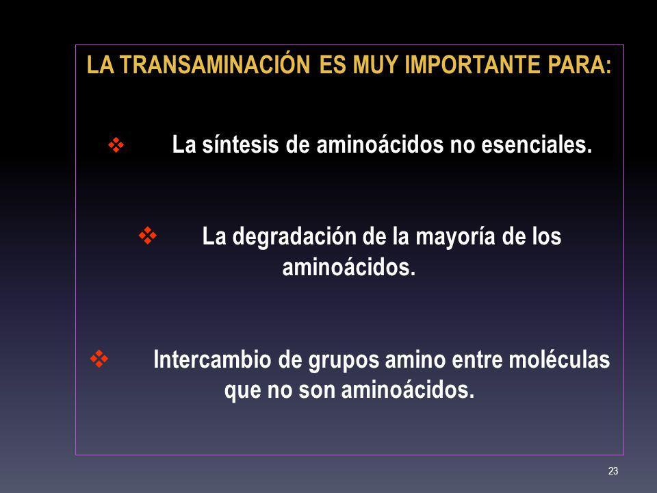 LA TRANSAMINACIÓN ES MUY IMPORTANTE PARA: La síntesis de aminoácidos no esenciales. La degradación de la mayoría de los aminoácidos. Intercambio de gr