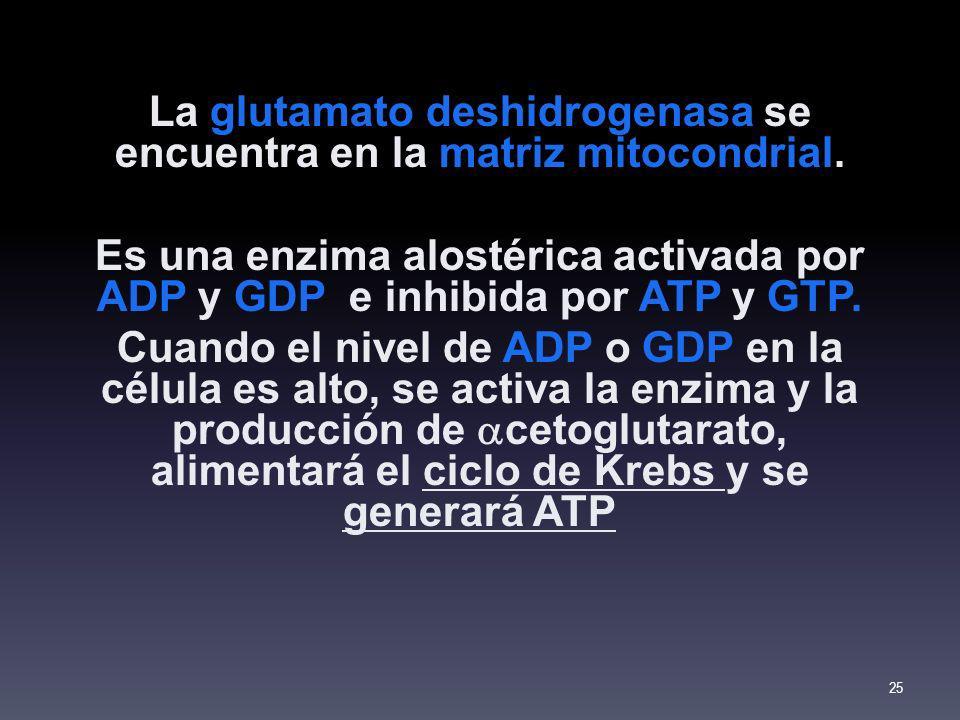 La glutamato deshidrogenasa se encuentra en la matriz mitocondrial. Es una enzima alostérica activada por ADP y GDP e inhibida por ATP y GTP. Cuando e