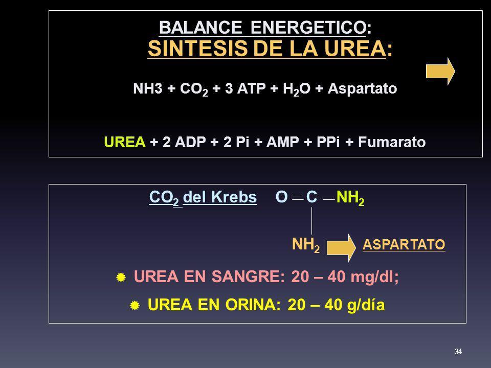 BALANCE ENERGETICO: NH3 + CO 2 + 3 ATP + H 2 O + Aspartato UREA + 2 ADP + 2 Pi + AMP + PPi + Fumarato 34 SINTESIS DE LA UREA SINTESIS DE LA UREA: CO 2