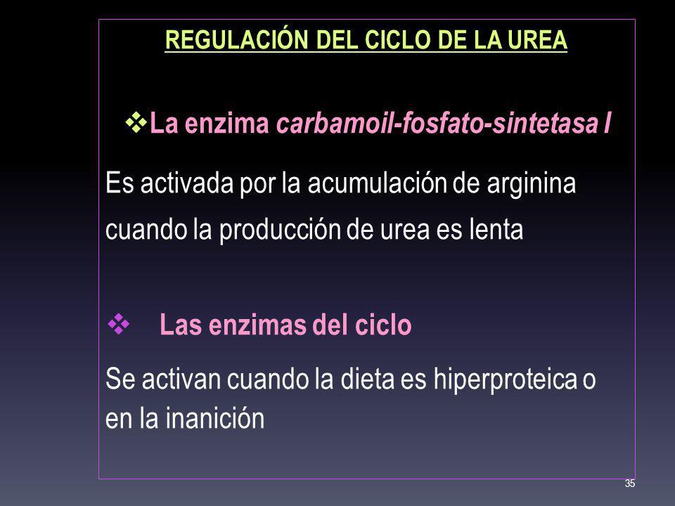 REGULACIÓN DEL CICLO DE LA UREA La enzima carbamoil-fosfato-sintetasa I Es activada por la acumulación de arginina cuando la producción de urea es len