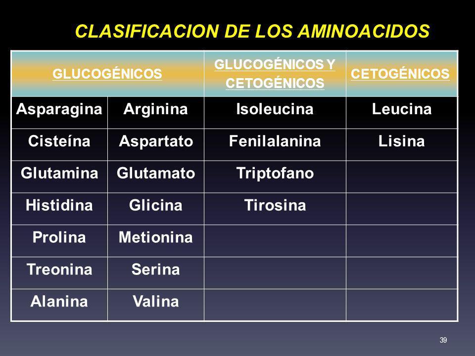 GLUCOGÉNICOS GLUCOGÉNICOS Y CETOGÉNICOS AsparaginaArgininaIsoleucinaLeucina CisteínaAspartatoFenilalaninaLisina GlutaminaGlutamatoTriptofano Histidina