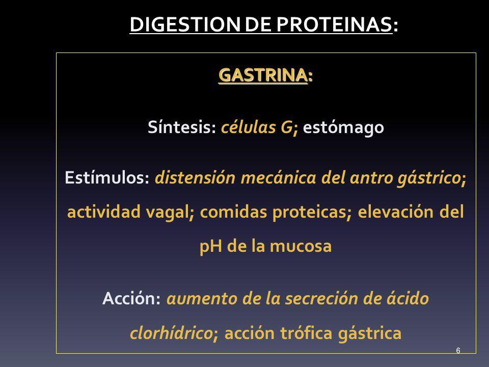 DIGESTION DE PROTEINAS: DIGESTION DE PROTEINAS: GASTRINA: Síntesis: células G; estómago Estímulos: distensión mecánica del antro gástrico; actividad v