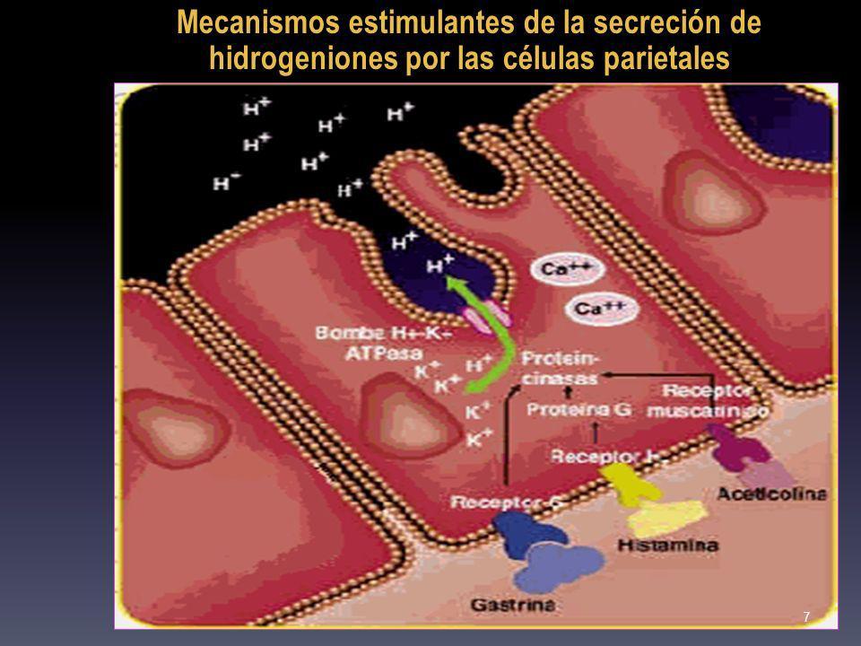 La glutamina transporta temporariamente amonio en sangre.