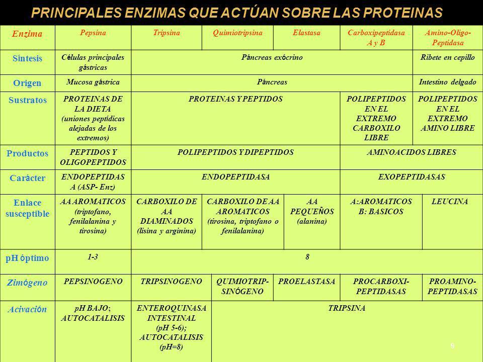 PRINCIPALES ENZIMAS QUE ACTÚAN SOBRE LAS PROTEINAS Enzima PepsinaTripsinaQuimiotripsinaElastasaCarboxipeptidasa A y B Amino-Oligo- Peptidasa S í ntesi