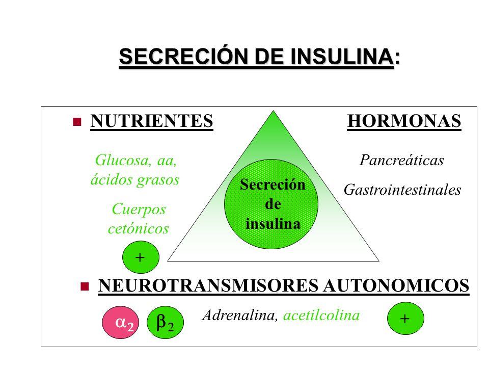 SECRECIÓN DE INSULINA: NUTRIENTES HORMONAS NEUROTRANSMISORES AUTONOMICOS Secreción de insulina Glucosa, aa, ácidos grasos Cuerpos cetónicos Pancreáticas Gastrointestinales Adrenalina, acetilcolina + +