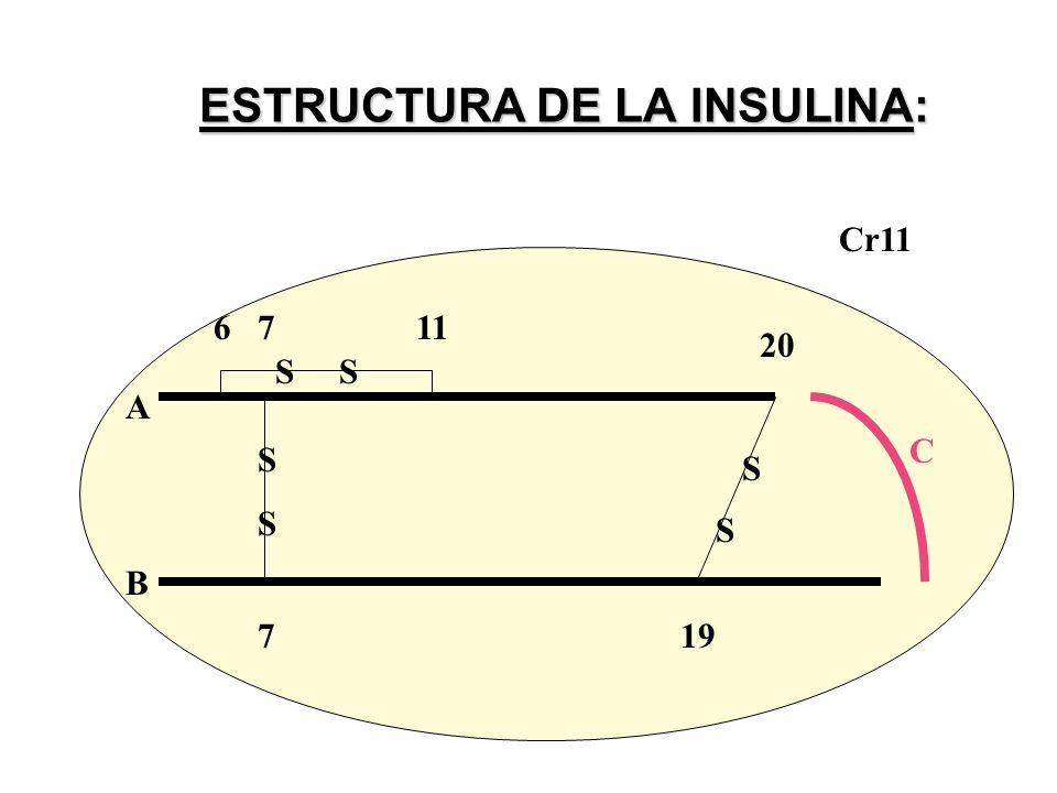 ESTRUCTURA DE LA INSULINA: A B C SSSS 719 20 6 7 11 S S S Cr11