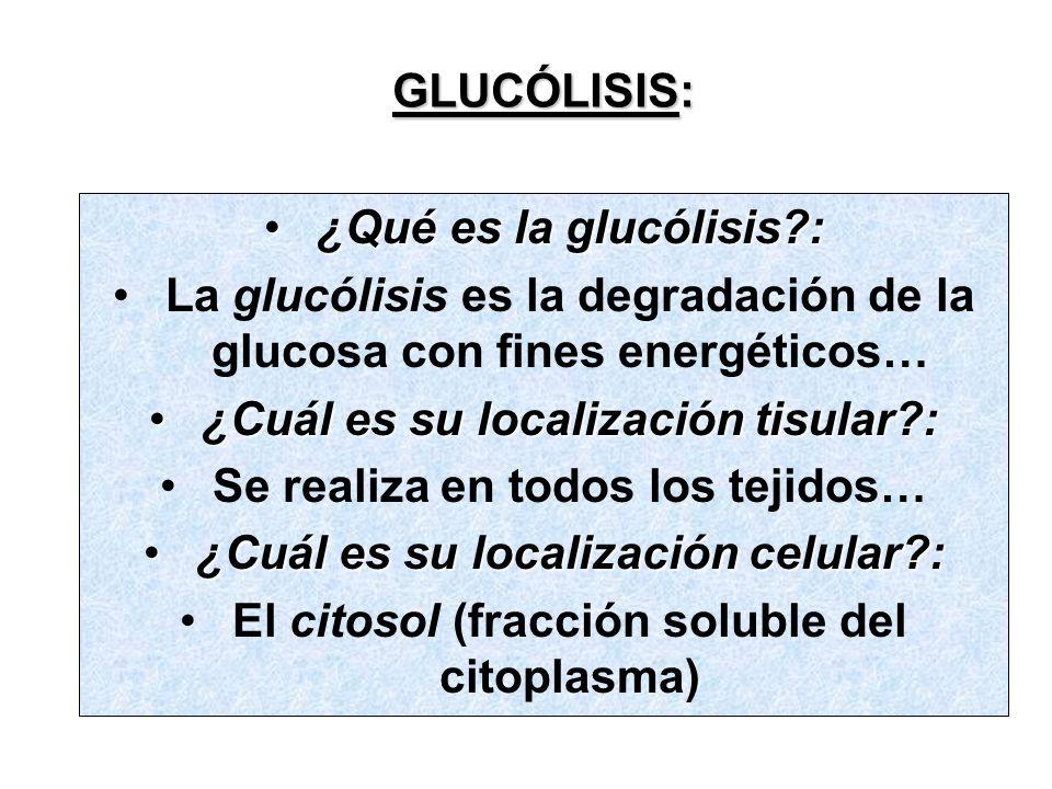 GLUCÓLISIS: ¿Qué es la glucólisis?:¿Qué es la glucólisis?: La glucólisis es la degradación de la glucosa con fines energéticos… ¿Cuál es su localización tisular?:¿Cuál es su localización tisular?: Se realiza en todos los tejidos… ¿Cuál es su localización celular?:¿Cuál es su localización celular?: El citosol (fracción soluble del citoplasma)
