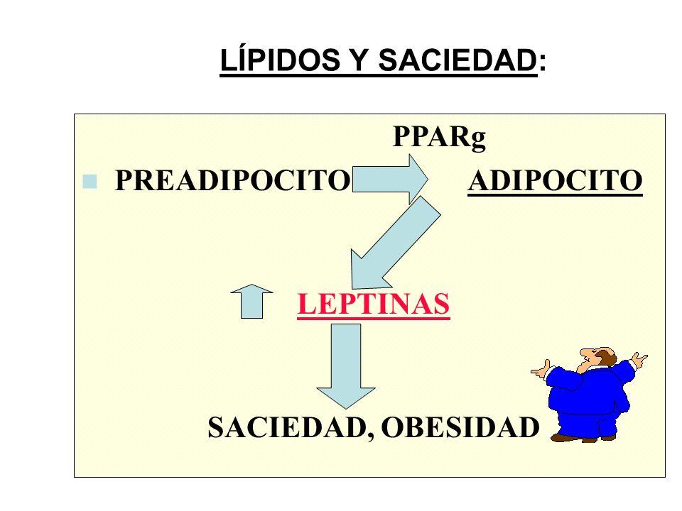 LÍPIDOS Y SACIEDAD: PPARg PREADIPOCITO ADIPOCITO LEPTINAS SACIEDAD, OBESIDAD