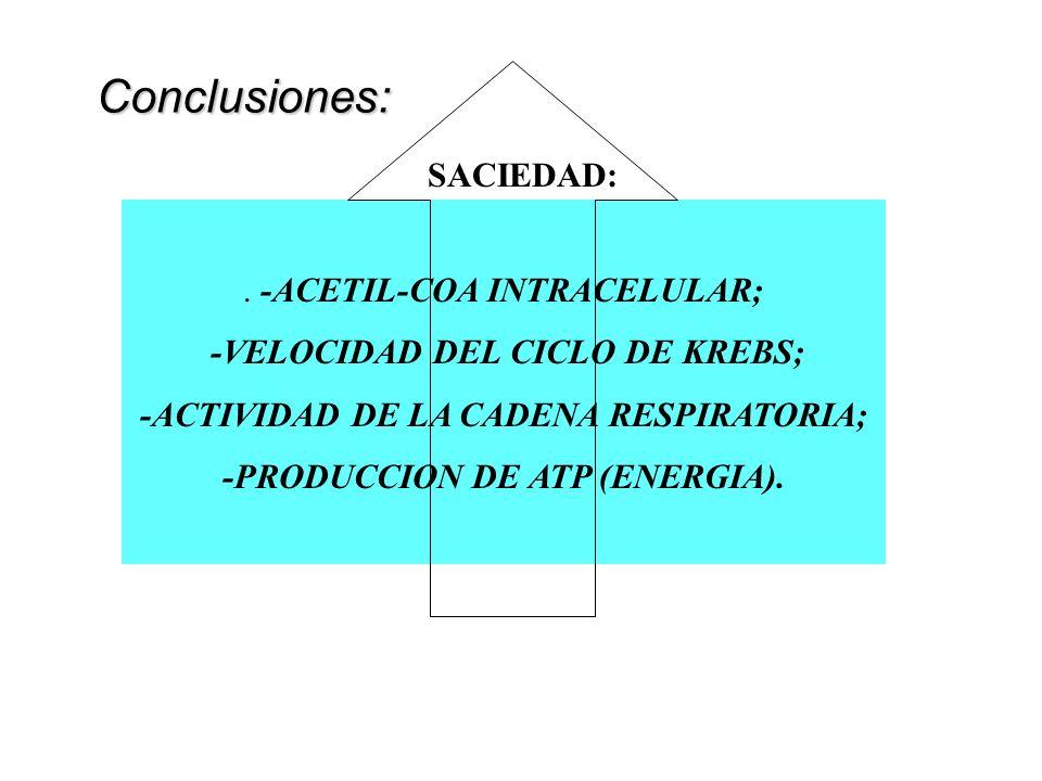 -ACETIL-COA INTRACELULAR; -VELOCIDAD DEL CICLO DE KREBS; -ACTIVIDAD DE LA CADENA RESPIRATORIA; -PRODUCCION DE ATP (ENERGIA).