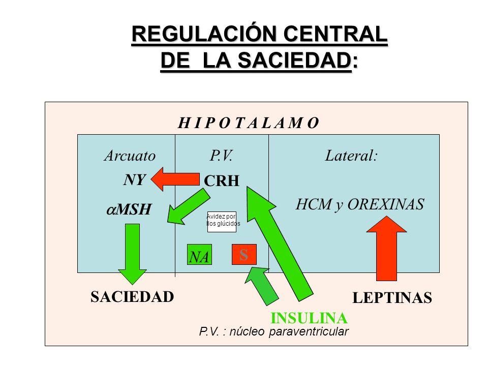 REGULACIÓN CENTRAL DE LA SACIEDAD: NY MSH CRH SACIEDAD S NA H I P O T A L A M O HCM y OREXINAS INSULINA Lateral: Arcuato P.V.