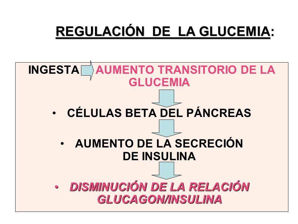 REGULACIÓN DE LA GLUCEMIA: INGESTA AUMENTO TRANSITORIO DE LA GLUCEMIA CÉLULAS BETA DEL PÁNCREAS AUMENTO DE LA SECRECIÓN DE INSULINA DISMINUCIÓN DE LA RELACIÓN GLUCAGON/INSULINADISMINUCIÓN DE LA RELACIÓN GLUCAGON/INSULINA