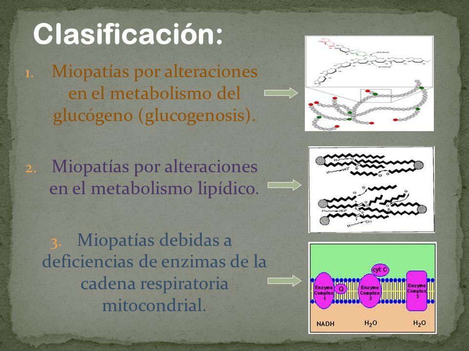 Clasificación: 1. Miopatías por alteraciones en el metabolismo del glucógeno (glucogenosis). 2. Miopatías por alteraciones en el metabolismo lipídico.