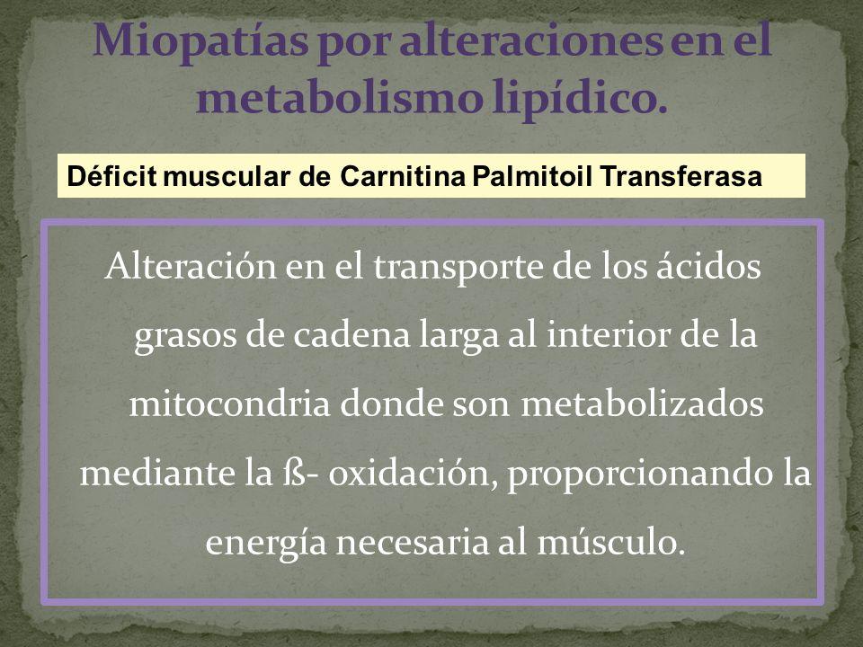 Alteración en el transporte de los ácidos grasos de cadena larga al interior de la mitocondria donde son metabolizados mediante la ß- oxidación, propo