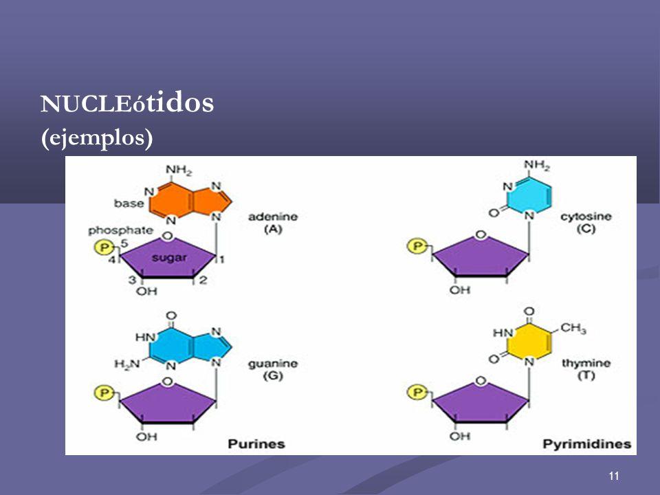 12 Nucleótidos Libres