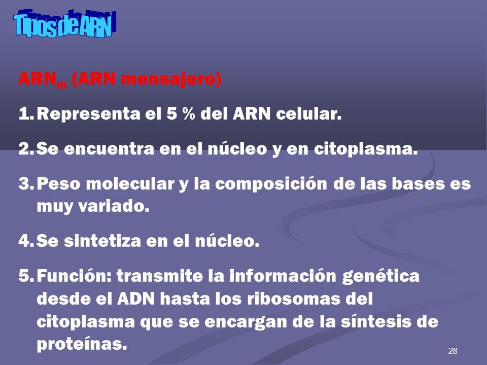 29 ARN m (ARN mensajero) 6.Es el más lábil de los ARN.