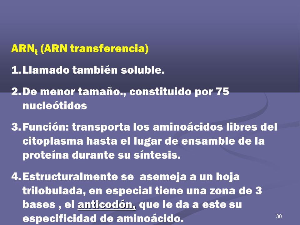 30 ARN t (ARN transferencia) 1.Llamado también soluble. 2.De menor tamaño., constituido por 75 nucleótidos 3.Función: transporta los aminoácidos libre