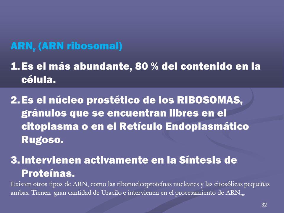 32 ARN r (ARN ribosomal) 1.Es el más abundante, 80 % del contenido en la célula. 2.Es el núcleo prostético de los RIBOSOMAS, gránulos que se encuentra