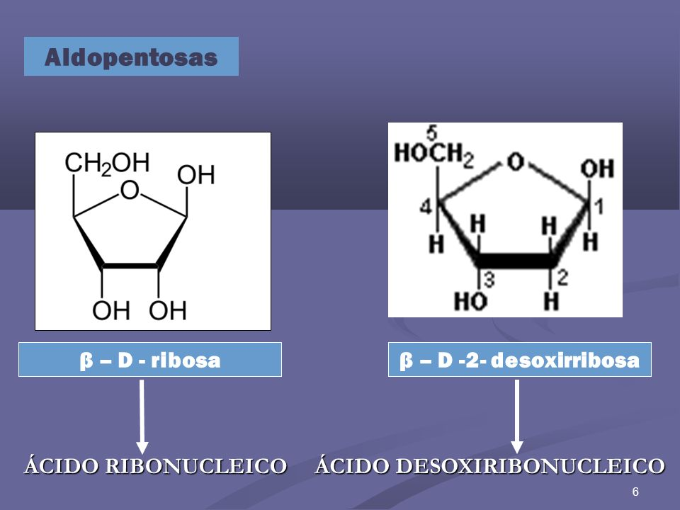 6 Aldopentosas β – D -2- desoxirribosaβ – D - ribosa ÁCIDO RIBONUCLEICO ÁCIDO DESOXIRIBONUCLEICO