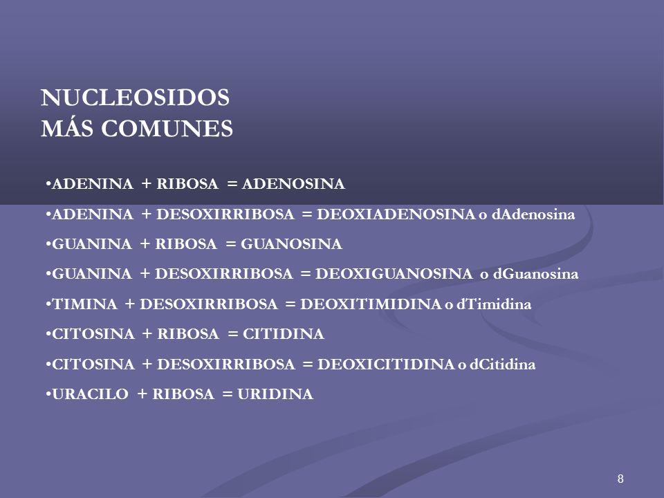 9 NITRÓGENO 9 DE UNA BASE PÚRICA NITRÓGENO 1 DE UNA BASE PIRIMÍDICA UNIÓN GLICOSÍDICO β C1C1 C5C5