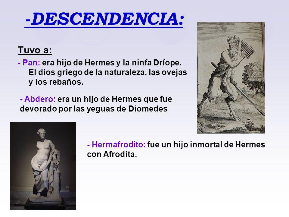-DESCENDENCIA: Tuvo a: - Pan: era hijo de Hermes y la ninfa Dríope. El dios griego de la naturaleza, las ovejas y los rebaños. - Hermafrodito: fue un