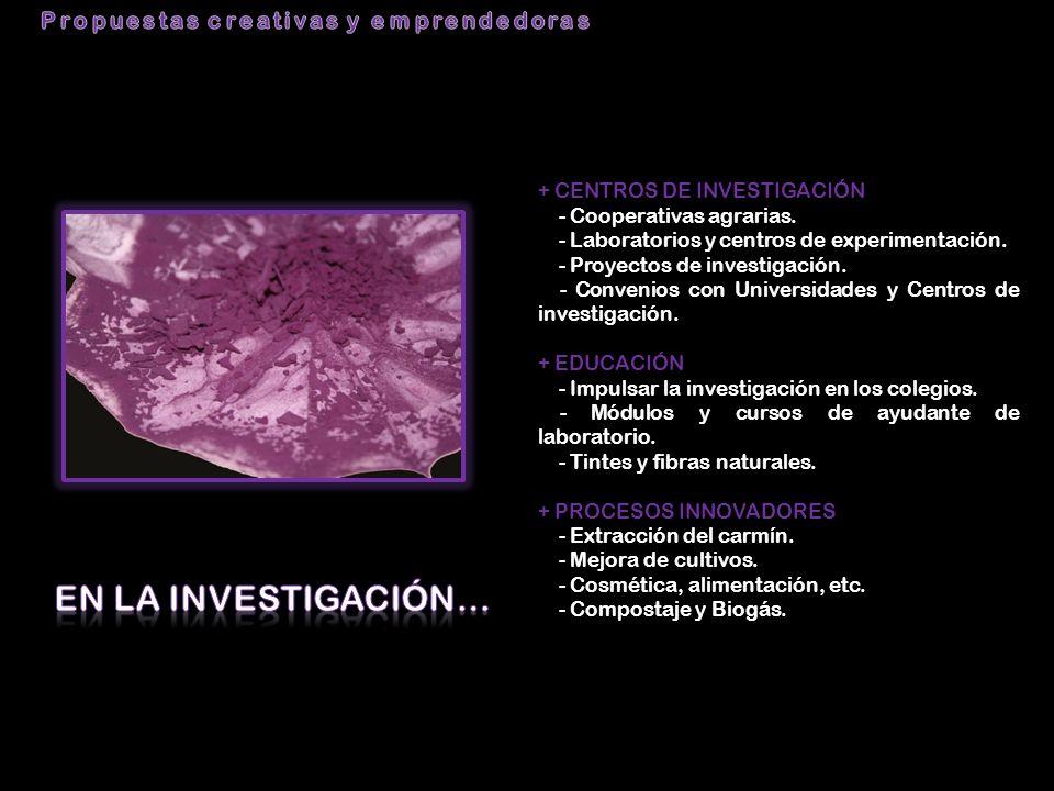 + CENTROS DE INVESTIGACIÓN - Cooperativas agrarias. - Laboratorios y centros de experimentación. - Proyectos de investigación. - Convenios con Univers