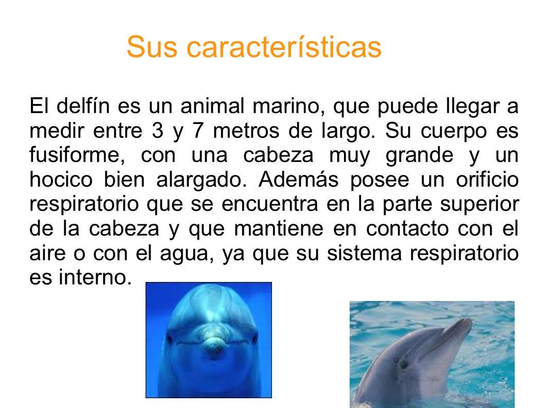 El delfín es un animal marino, que puede llegar a medir entre 3 y 7 metros de largo. Su cuerpo es fusiforme, con una cabeza muy grande y un hocico bie