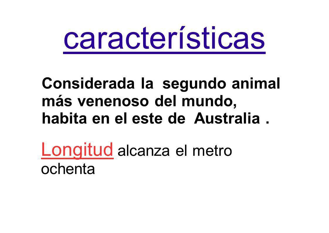 características Considerada la segundo animal más venenoso del mundo, habita en el este de Australia. Longitud alcanza el metro ochenta