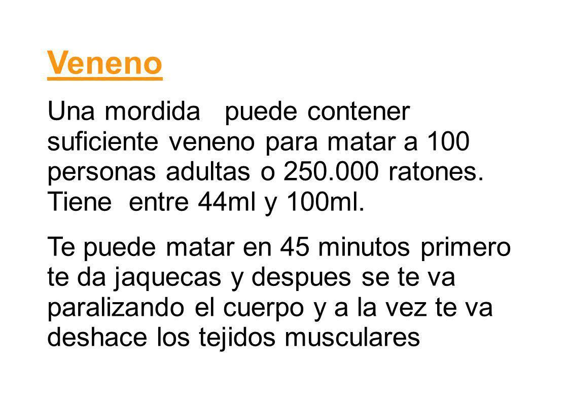 Veneno Una mordida puede contener suficiente veneno para matar a 100 personas adultas o 250.000 ratones. Tiene entre 44ml y 100ml. Te puede matar en 4
