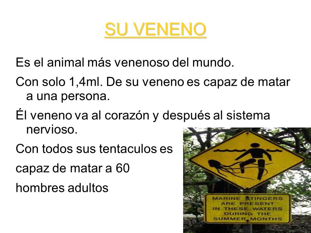 SU VENENO Es el animal más venenoso del mundo. Con solo 1,4ml. De su veneno es capaz de matar a una persona. Él veneno va al corazón y después al sist