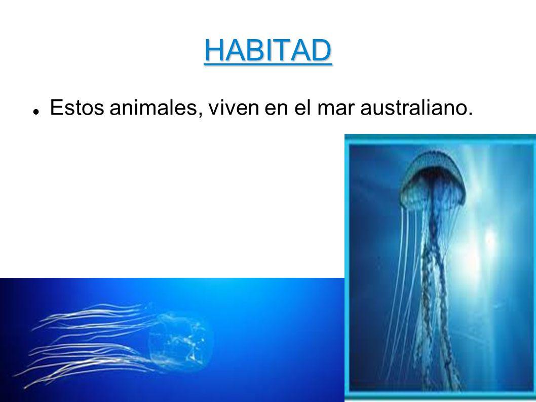 HABITAD Estos animales, viven en el mar australiano.