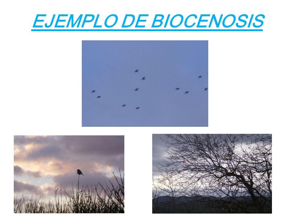 EJEMPLO DE BIOCENOSIS